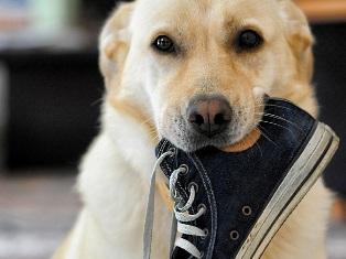 犬とスニーカー