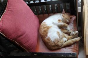 青海塔頂陽光国際ユースホステルには猫が数匹います。