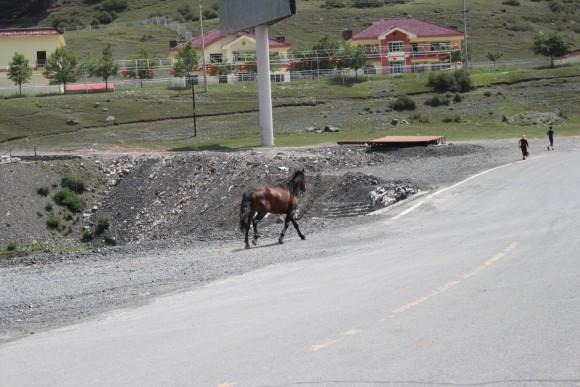 ウルムチ,南山,馬