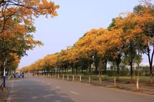 上海市郊外の紅葉