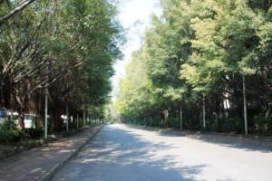 広州体育館へと続く緑豊かな道