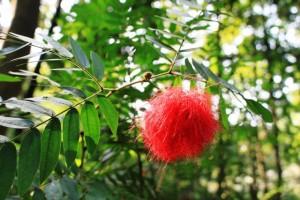 広州の大自然、観光名所、赤い花
