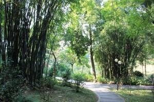 広州の大自然、観光名所、竹