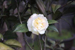 留園に咲いている花