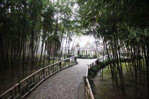 留園の竹林