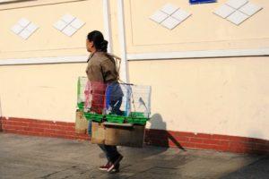 鳥を売る女性