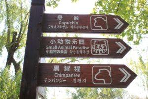 日本語の表示