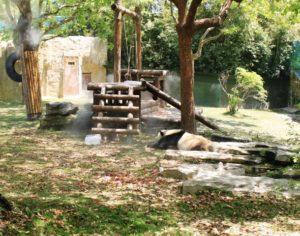 上海野生動物園のパンダ遊び場