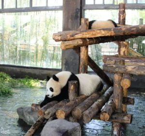 ちょっとだけ動くパンダ