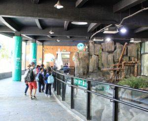 上海野生動物園のパンダを見る観光客