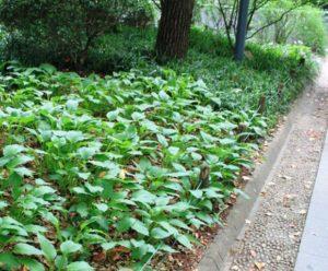 人民公園の植物